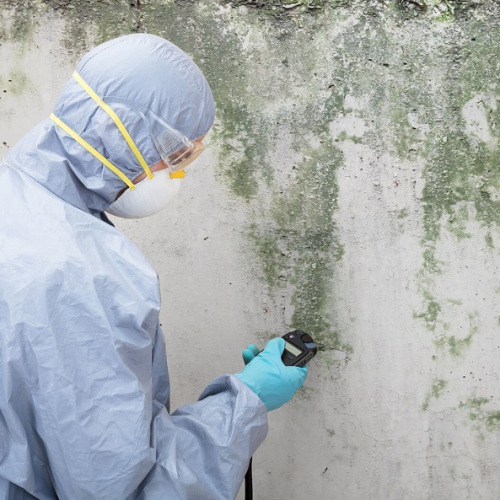 2020-10-05 10_34_24-mold-remediation.jpg (JPEG Image, 900 × 600 pixels)